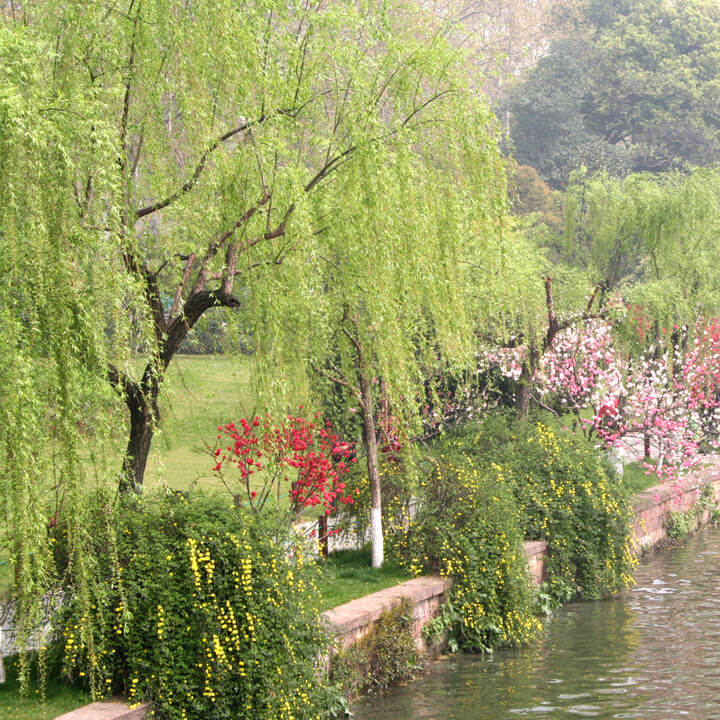 Palliative Care Spring Willow