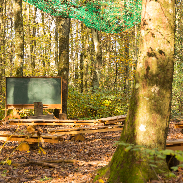 Outdoor classroom, tree, benches, chalkboard